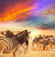 Canvas-taulu Krugerin luonnonpuiston seeprat 360